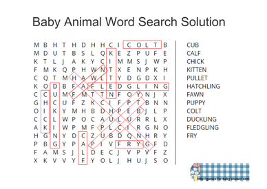 animal baby word search solution